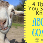 4 Things to Know About Goats Before You Get Them