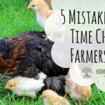 5 Mistakes First-Time Chicken Farmers Make