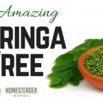 The Amazing Moringa Plant