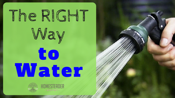 The Right Way to Water Your Plants