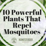 10 Powerful Plants That Repel Mosquitoes