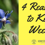 4 Reasons to Keep Weeds