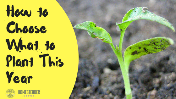 How to Choose What to Plant This Year