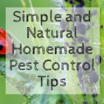 Simple and Natural Homemade Pest Control Tips