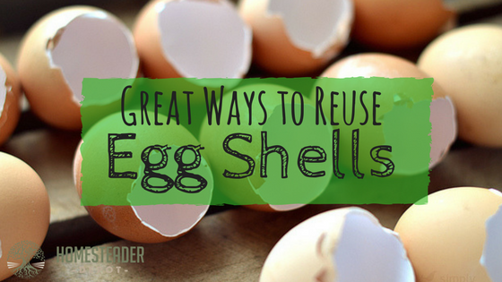 13 Useful Ways to Reuse Eggshells