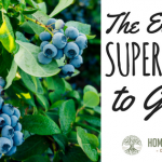 The 6 Easiest Superfoods to Grow