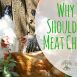 Why Raise Meat Chickens?