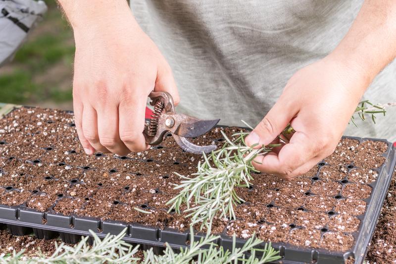 DIY Plant Propagating