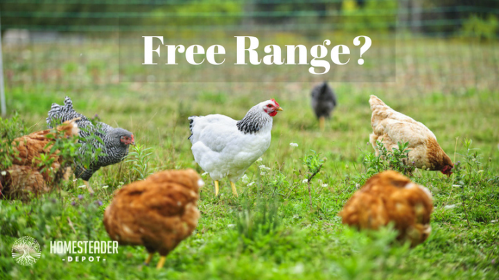 "What Does ""Free Range"" Really Mean?"