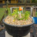 5 Things to Consider When Building an Aquaponic System