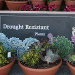 13 Drought Tolerant Plants for Low Maintenance Landscapes