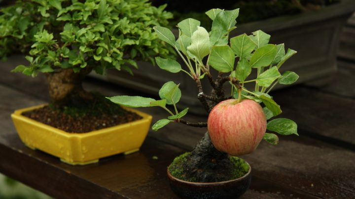 Can You Grow Miniature Fruit Trees and Non-Native Plants?