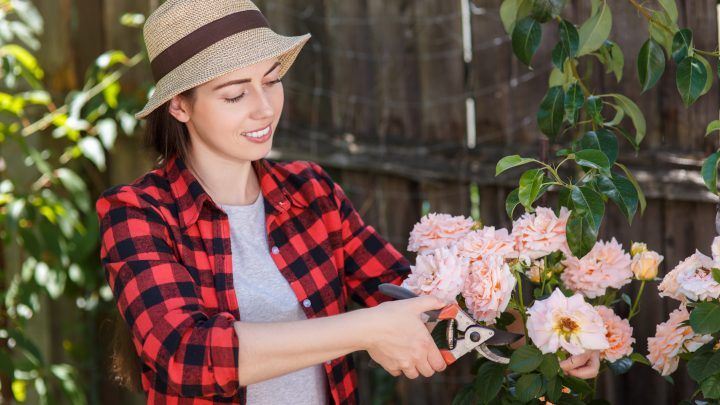 How to Prune your Roses the Proper Way