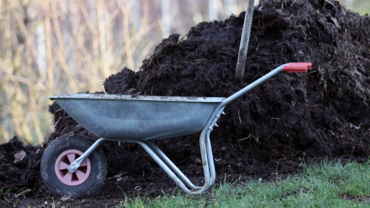 The Best All Natural Fertilizers For Your Garden