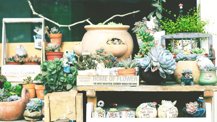 5 Great Benefits of Having Succulents in Your Home
