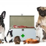 5 Critical Tips for Proper Pet Care