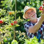 7 Tips to Grow the Perfect Tomatoes