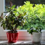 Do Houseplants Need Different Care in the Winter?