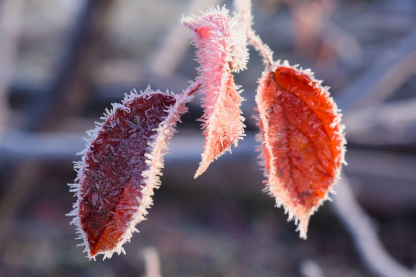 Protecting Your Plants from Frost and Freeze