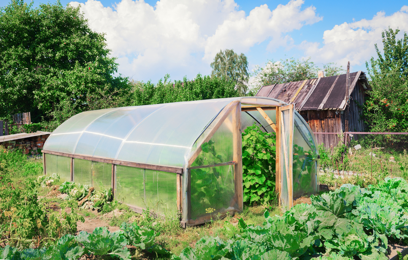 Why Do You Need a Greenhouse and Things to Look for