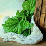 5 Great Uses for Cheesecloth in Your Garden