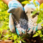 5 Common Fertilization Mistakes